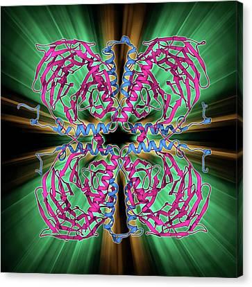 Transducin Protein Beta-gamma Complex Canvas Print