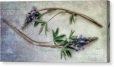 Lupine Canvas Print - Transience by Priska Wettstein