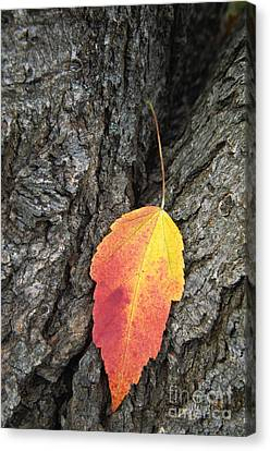 Southern Indiana Autumn Canvas Print - Transient Beauty - D008649 by Daniel Dempster