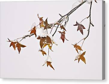 Canvas Print featuring the photograph Transition by Sherri Meyer