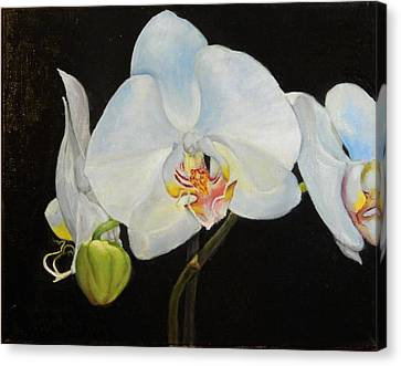 Canvas Print featuring the painting Translucent Orchids by Sandra Nardone