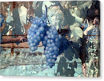 Transparent Grapes Canvas Print by Rebecca Parker