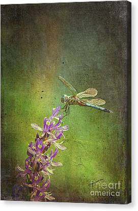 Treading Lightly Canvas Print by Patricia Griffin Brett