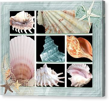 Treasures Of The Sea Canvas Print