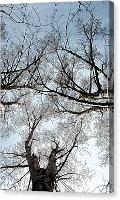 Tree 2 Canvas Print by Minnie Lippiatt