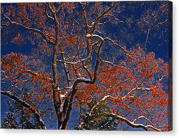 Canvas Print featuring the photograph Tree Against Dark Sky by Andy Lawless