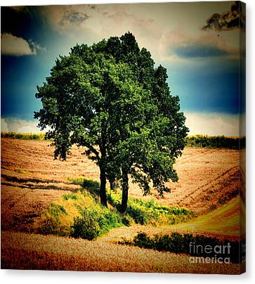 Canvas Print featuring the photograph Tree Alone by Boon Mee