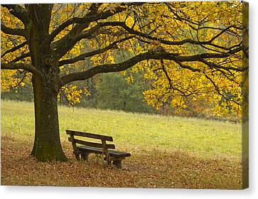 Tree And Bench In Fall Canvas Print