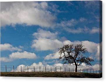 Wine Scene Canvas Print - Tree And Fence On A Landscape, Santa by Panoramic Images