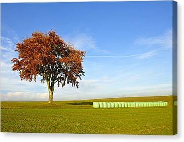 Tree And Hay Bales Canvas Print