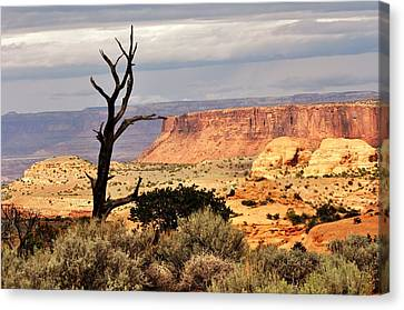 Tree And Mesa Canvas Print by Marty Koch