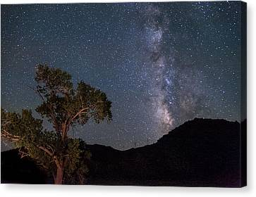 Tree And Milky Way Canvas Print