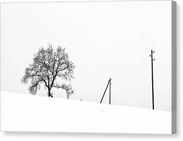 Tree And Poles Canvas Print by Dominique Dubied