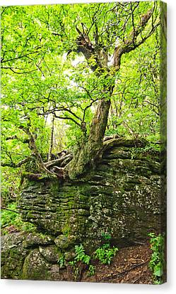 Tree And Rock Canvas Print by Mela Luna