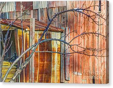 Tree And Rust Canvas Print by Jim Wright