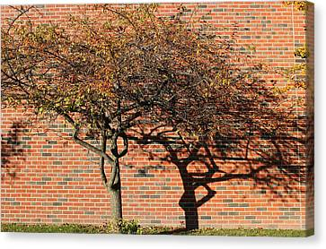 Tree And Shadow 1 Canvas Print