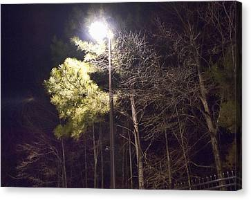 Tree And Streetlight  Canvas Print