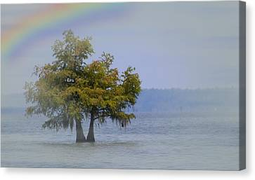 Canvas Print featuring the mixed media Tree And The Rainbow by Bob Pardue