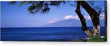 Tree At A Coast, Kapalua, Molokai Canvas Print by Panoramic Images