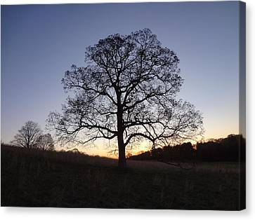 Canvas Print featuring the photograph Tree At Dawn by Michael Porchik