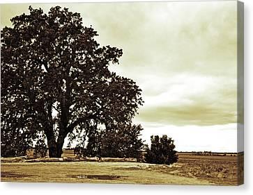 Tree At End Of Runway Canvas Print