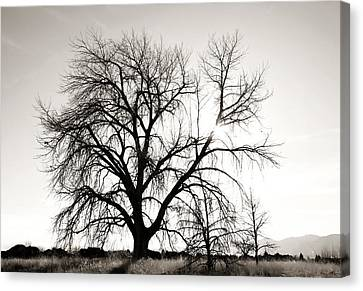 Tree At Harpers Lake Louisville 2 Canvas Print