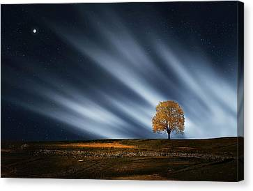 Tree At Night With Stars Canvas Print by Bess Hamiti