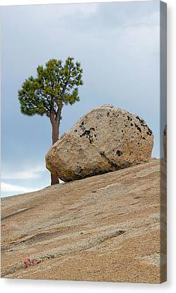Tree At Olmsted Point Yosemite National Park California Canvas Print by Christine Till