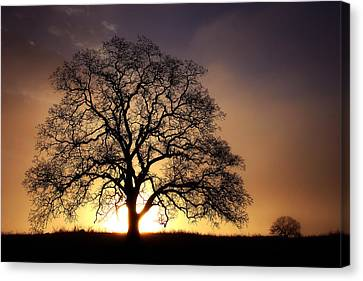 Tree At Sunrise In The Fog Canvas Print