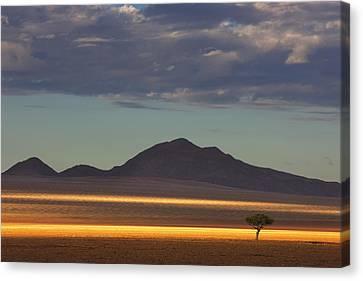Tree At Sunrise Namibrand Nature Canvas Print by Theo Allofs