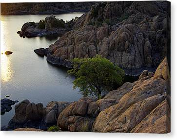 Tree At Sunset At The Granite Dells Arizona Canvas Print by Dave Dilli