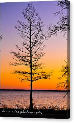 Tree At Sunset Canvas Print by Bruce A Lee