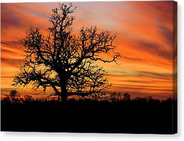 Tree At Sunset Canvas Print by Elizabeth Budd