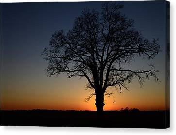 Canvas Print featuring the photograph Tree At Sunset by Michael Donahue