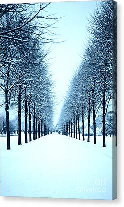 Tree Avenue In Snow Canvas Print