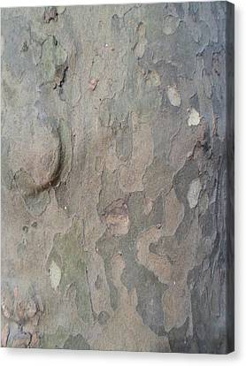 Tree Bark Canvas Print by Jenna Mengersen