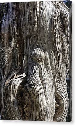 Canvas Print featuring the photograph Tree Bark No. 3 by Lynn Palmer