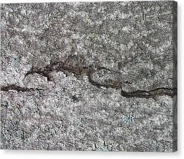 Tree Bark With Crack Canvas Print