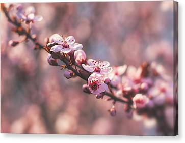 Tree Branch Bloom Canvas Print
