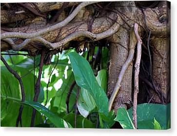 Canvas Print featuring the photograph Tree Branch by Rafael Salazar