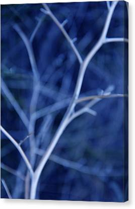 Tree Branches Abstract Blue Canvas Print by Jennie Marie Schell