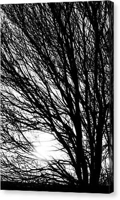 Tree Branches And Light Black And White Canvas Print