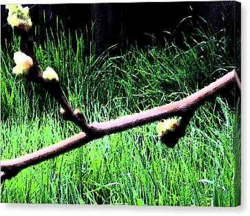 Tree Buds And Tall Grass Canvas Print