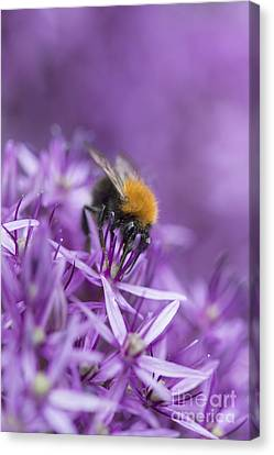The Tree Bumblebee Canvas Print by Tim Gainey