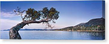 South Of France Canvas Print - Tree By The Sea - Cote D'azur by Rod McLean