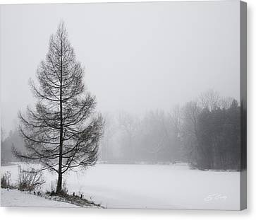Tree By The Snowy Lake Canvas Print