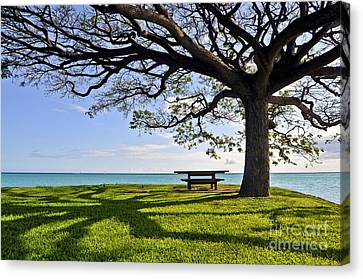 Tree Canopy Canvas Print by Gina Savage
