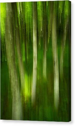 Tree Canopy Canvas Print by Serge Skiba