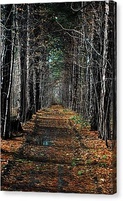 Tree Chute Canvas Print