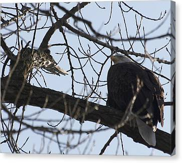 Tree Eagle Canvas Print by Valerie Wolf